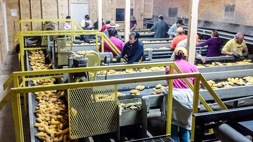 Seed Corn Drying Facility